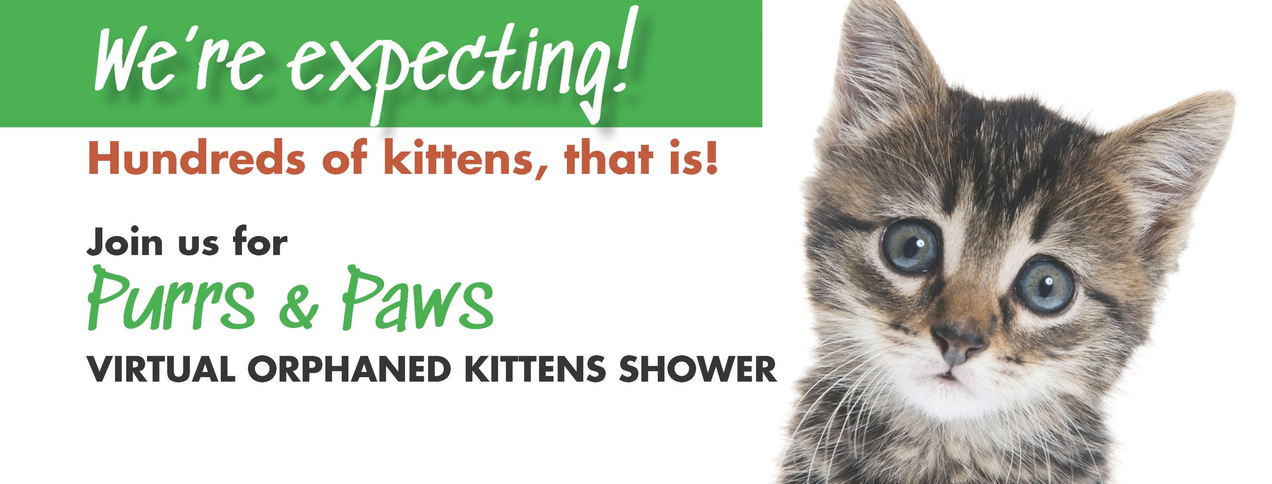 "New campaign to help during ""Kitten Season"""