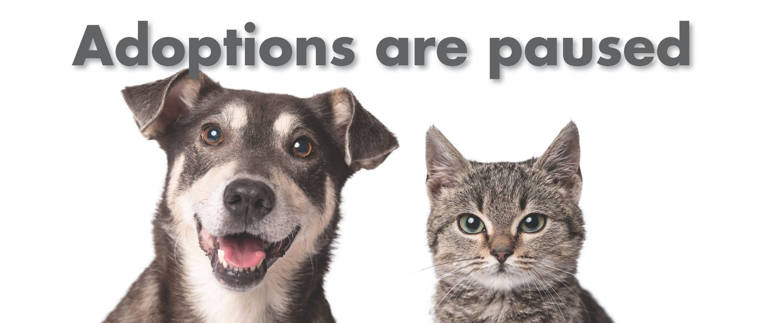 Adoptions Currently on Hold