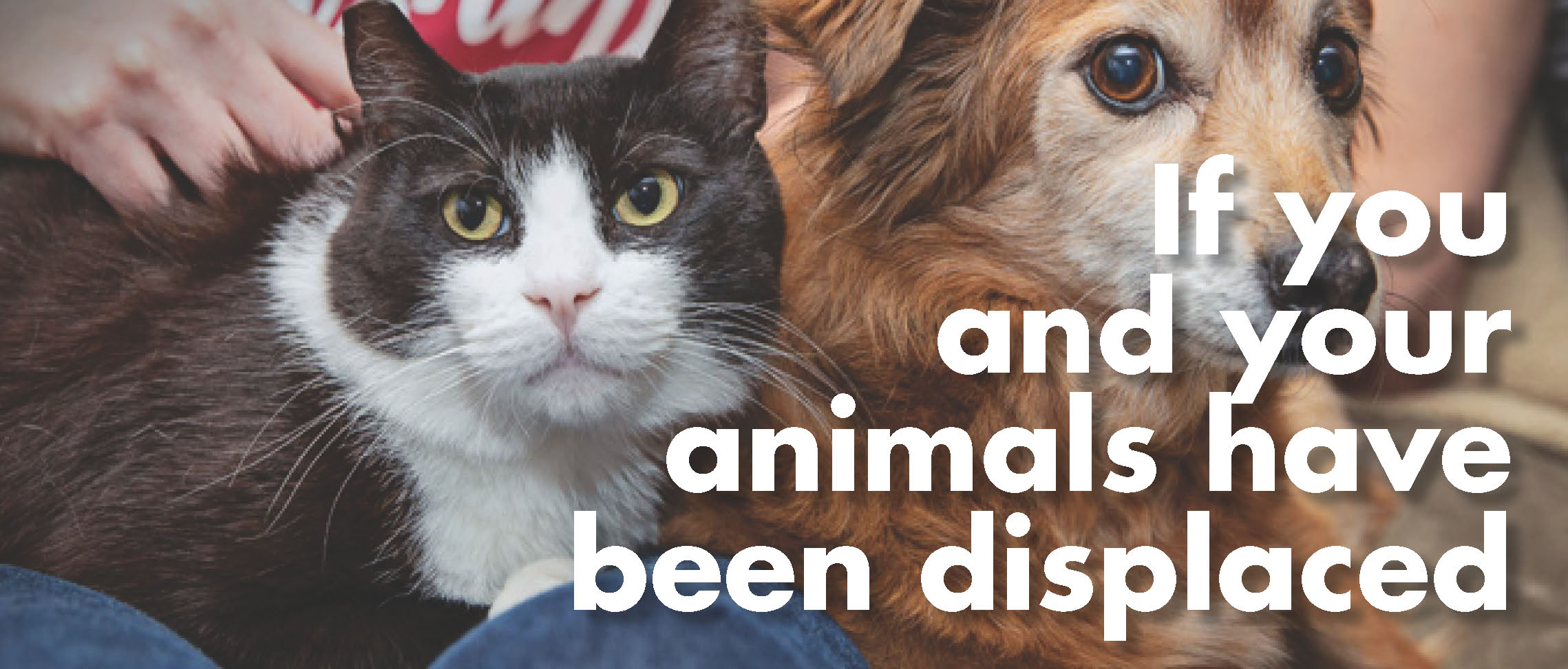 If You and Your Animals have been Displaced