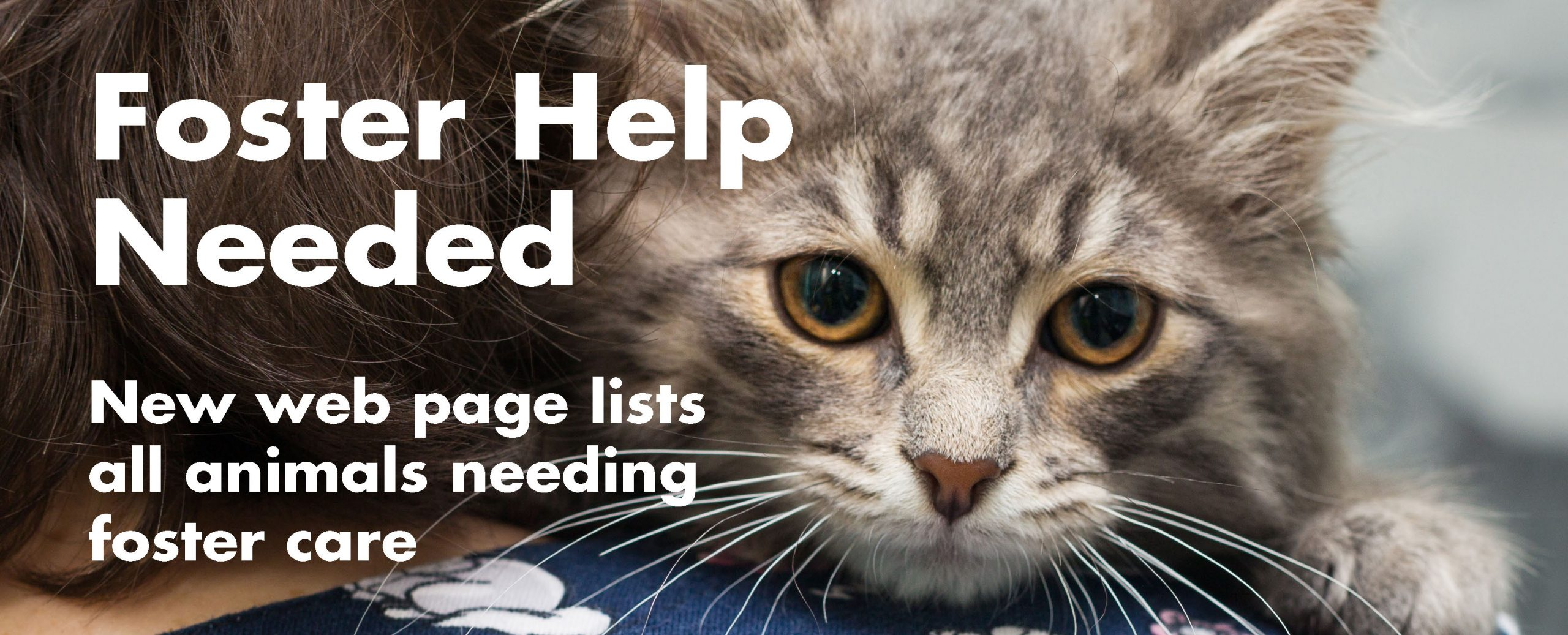 Foster Help Needed – New web page lists animals needing foster care