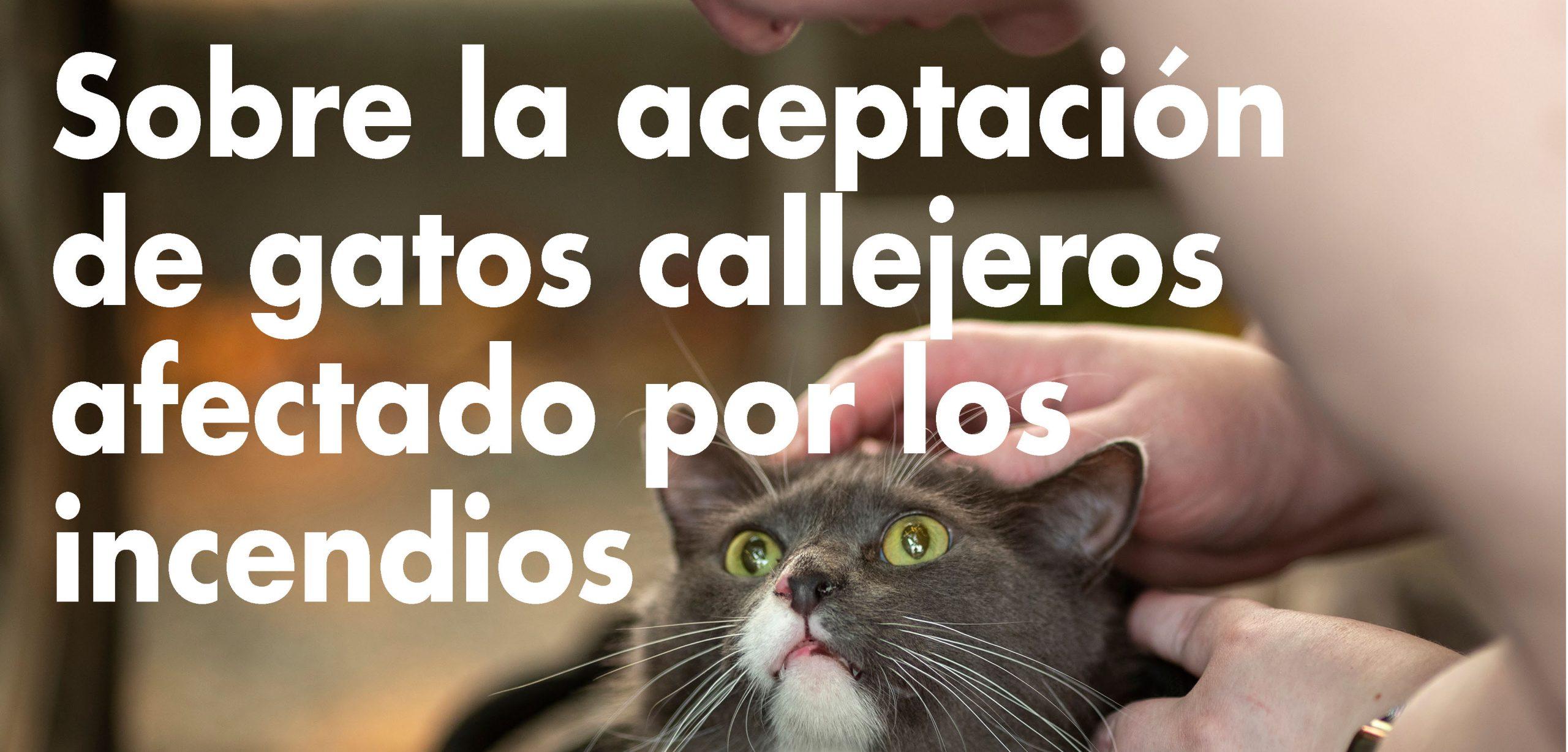Sobre la aceptación de gatos callejeros afectado por los incendios