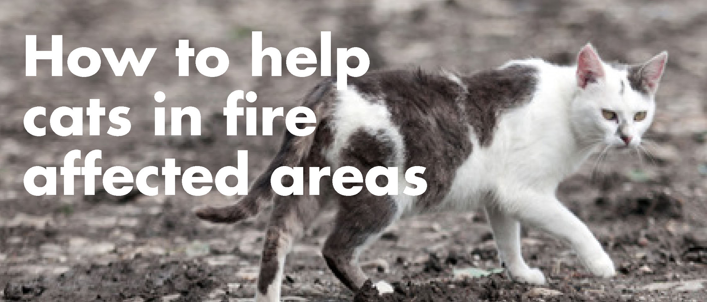 How to help cats within the fire area