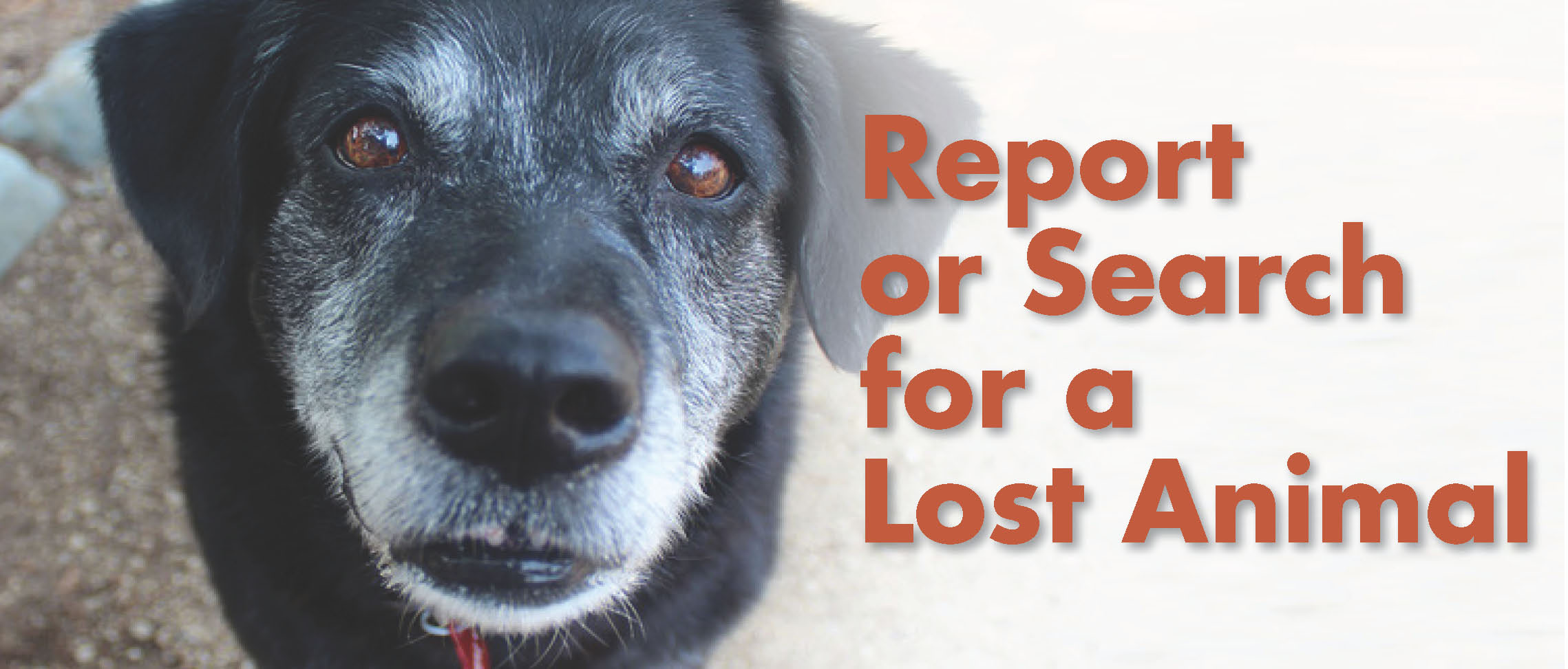 Report or Search for a Lost Animal