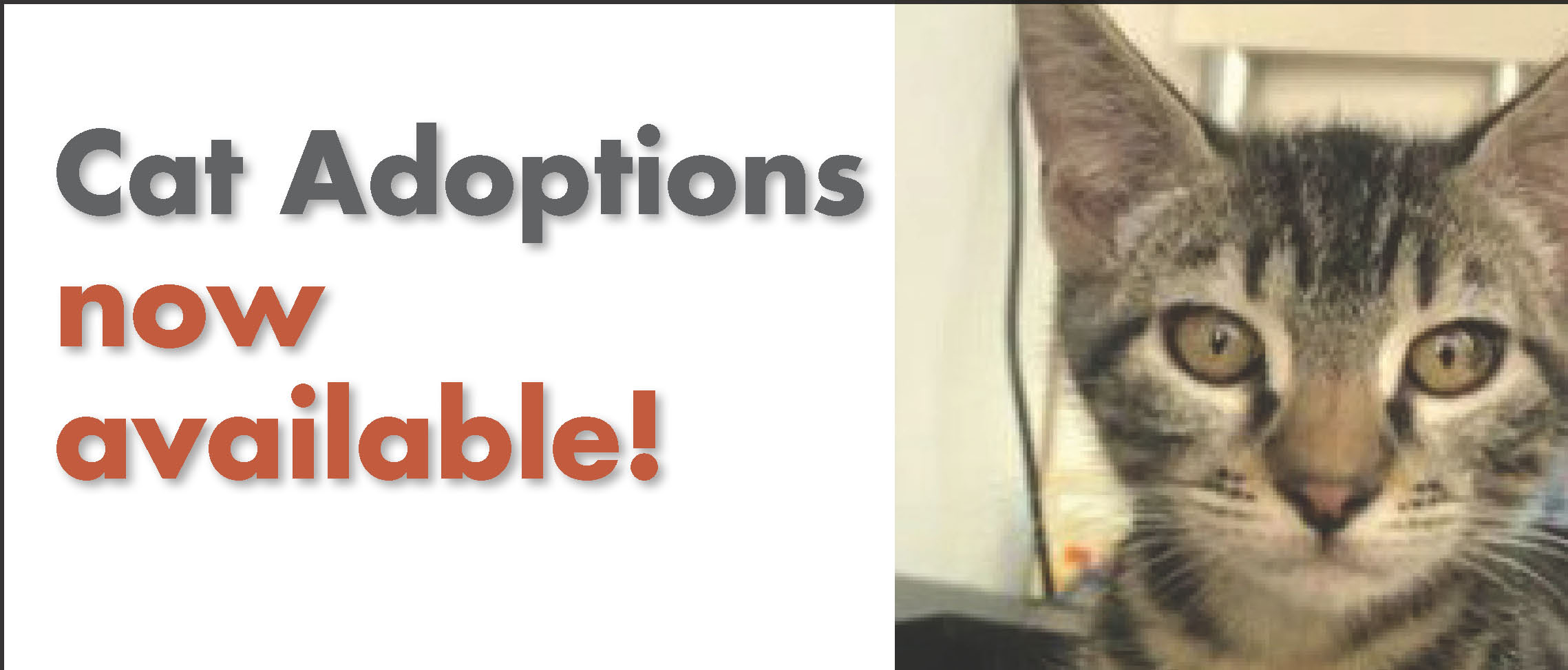 Cat adoptions are back!